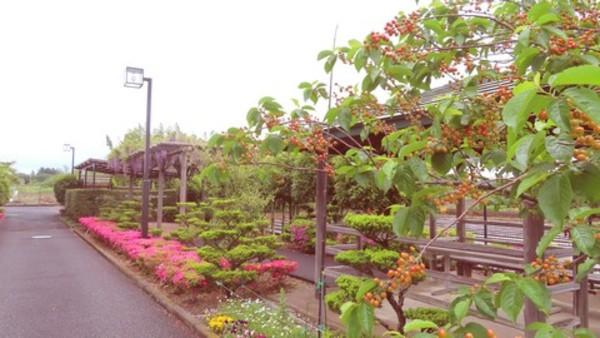 初夏の園庭風景